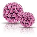 CLART HPV